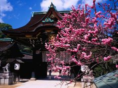 Japan in bloom: Cherry blossom is a big draw but it's plum that heralds spring | Asia | Travel | The Independent