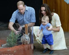 Prince George seemed mesmerised by the young bilby, reaching out to him and trying to touch him through the glass
