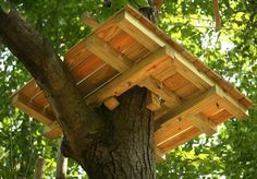 Platforms are held on to the trees by gravity and wooden wedges, causing the trees no physical harm. Photo: Brian A. Pounds / Connecticut Post