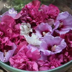 Rose of Sharon flowers are edible! Not to mention the health benefits of the bark, root bark and leaves when cooked too!