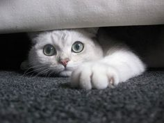 31 Embarrassing Ways For Cats To Get Stuck - The TCS Kitty Illustrated Guide - TheCatSite.com Community