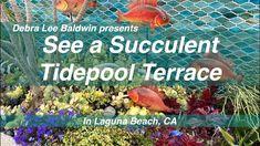 Succulent Tidepool Terrace