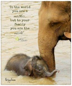 To the world you are a mother, but to your family you are the world. Mom provides a place to feel at home, no matter where she happens to be.