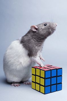 The only one smart enough to figure out the cube !