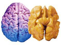 19 Best Brain Superfoods | Dr. Daniel Amen