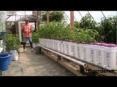 Dutch Bucket Hydroponics – How It Works & How to Make Your Own Buckets #AquaponicsTips