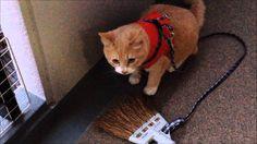 猫ズとベランダで居酒屋ごっこしてみたら・・・;猫おもしろ動画