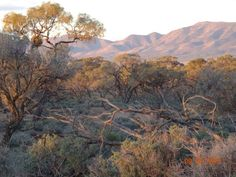 Sunset Flinders Ranges