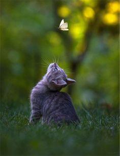 Кошка, Бабочка, Охота, Природа