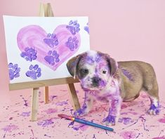 Paw painting - Safe Paints to Use for Making a Dog Paw Print – Paw painting Paw Print Crafts, Paw Print Art, Dog Crafts, Dog Paw Prints, Dog Paw Art, Pet Paws, Dog Paintings, Diy Stuffed Animals, Dog Love