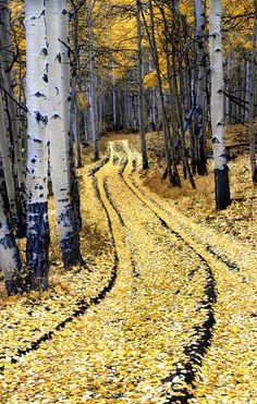 A Pathway through the Aspens Photograph Fine Art Print Dave Mills