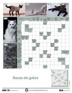 Autodefinidos. Razas de gatos. #Pasatiempos #Entretenimiento #Autodefinidos #Mascotas #Gatos #Animales  Más en www.sinapsispasatiempos.com Soap, Cats, Breeds Of Cats, Crossword Puzzles, Entertainment, Printables, Pets, Lyrics, Gatos