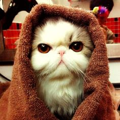 Hello. I'm a Padawan Jedi Knight. Cute cat