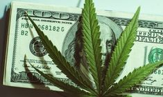 Top Investor Reveals 4 Pot Stocks Your Portfolio Needs The Pretenders, Penny Stocks, The Next Big Thing, Taking Shape, Automobile Industry, Lost Money, Investors, Green And Gold, How To Make Money