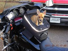 Dogs on Motorcycles -  This would be perfect!  And that looks like my beautiful little Sophie!