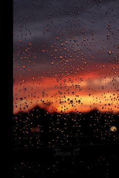 Twilight through a screened window