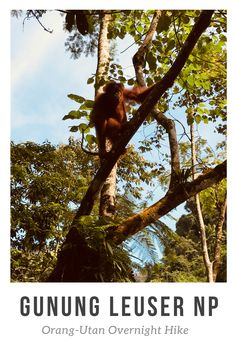 Orang Utan, Roadtrip, Strand, Hiking, Box, Driving Route Planner, Vacation Package Deals, Indonesia, New Zealand