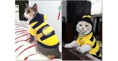 Disfraz Abejita ropa para gato y  Perro gatitos y perritos cachorros pet