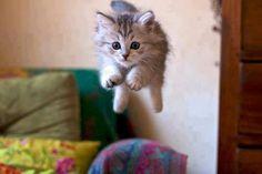 gambar kucing terbang, gambar kucing lucu, gambar anak kucing lucu
