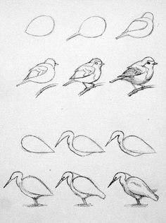 Pencil Drawing Techniques - Learn the easiest ways to draw birds. Step by Step bird drawing tutorial.