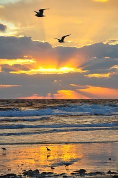 Free Picture: Photo of beautiful early morning beach sunrise scenery in Florida with seagulls in flight.