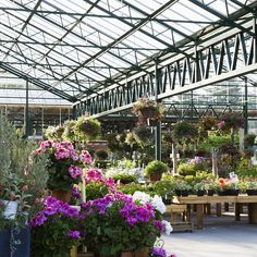 There a big nurseries and small nurseries, but what makes the ultimate garden center? The Grumpy Gardener shares his six must-haves that separate the gems from the duds. Garden Stand, Garden Shop, Sun Plants, Blooming Plants, Colorful Plants, Cool Plants, Hydrangea Varieties, Hydrangea Garden, Dwarf Japanese Maple