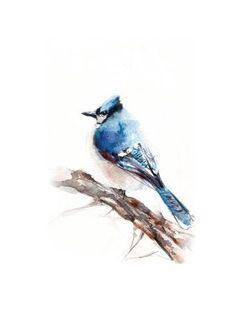 Art Print: Blue Jay by Sophia Rodionov : 12x9in
