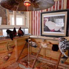 Decorate the inside of your coop! Chickens need art too! My dream coop. Chicken Pen, Chicken Lady, Keeping Chickens, Raising Chickens, Backyard Farming, Chickens Backyard, Backyard Coop, Gallus Gallus Domesticus, Chickens And Roosters