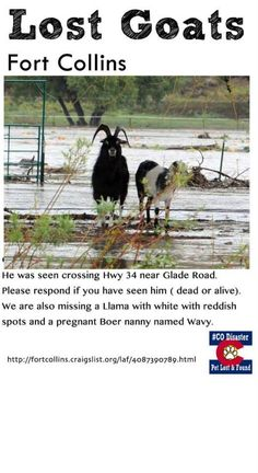 #COFlood #Livestock Lost Goats in Fort Collins CO near glade road.. Please share