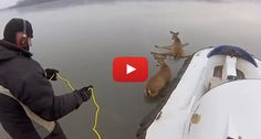Watch This Amazing Rescue Of Trapped Deer From Frozen Lake Using A Freakin' Hovercraft!