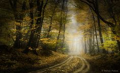 The Netherlands    Trails by Nelleke