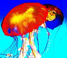Comic Jellyfish - Jon Lander - copyright 2015