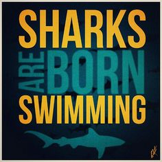 """""""Sharks are born swimming"""" something to remember ;-) SunshinyDre"""