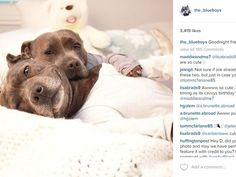 Meet Darren & Phillip, the pit bulls taking over Instagram