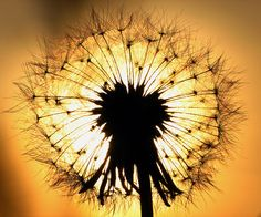 """""""Seu sofrimento é intenso e um novo nascimento está chegando; seja feliz, seja agradecido, não tenha medo da morte, tenha gratidão, estes são os rumores de um novo nascimento e o velho deve morrer para dar vida ao novo; a semente tem de quebrar-se para desabrochar em flor. """" OSHO"""