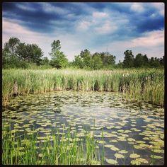 Chemong Lake - Peterborough On