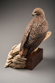 Life-size Red Tail Hawk Sculpture Wood carving by woodenflight