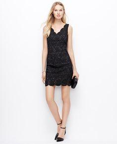 scalloped lace dress / ann taylor