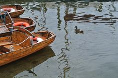 Boat and Duck, Lake District, UK.
