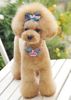 Lotta --愛犬の友 ヘアスタイルカタログ--