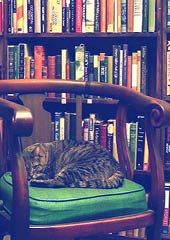 A catalogue of bookstore cats - a beautiful read of some rag tag cats that have made a bookstore their home.