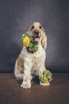 Totally paw-some: http://www.stylemepretty.com/collection/3240/ | Photography: I Heart Weddings - http://iheartweddings.com.au/
