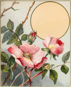 The Graphics Fairy: wild roses moon or label