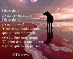 poema para mi perro que murió
