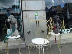 Poodles sitting outside Frangos & Frangos in Daylesford