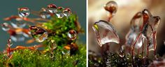 These ethereal photographs of frozen water drops on plants are at such an extreme scale that they seem to be of a miniature, undiscovered worlds. Students looking for macro photography ideas often do not have to look far. At an extreme close-up, a whole other realm of detail and possibility emerges.