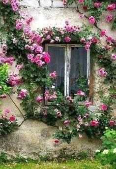 Bonita Janela rodeada de flores que transmite calma e bem-estar.