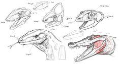 creature anatomy - Google Search
