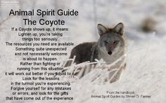 Animal Spirit Guide : The Coyote