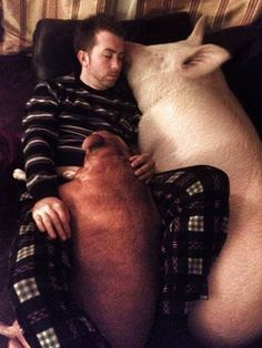 And how can you blame them when you look at this cuddle session?? | Esther The Wonder Pig And Her Dads Are The Most Inspiring Trio You Need To Meet